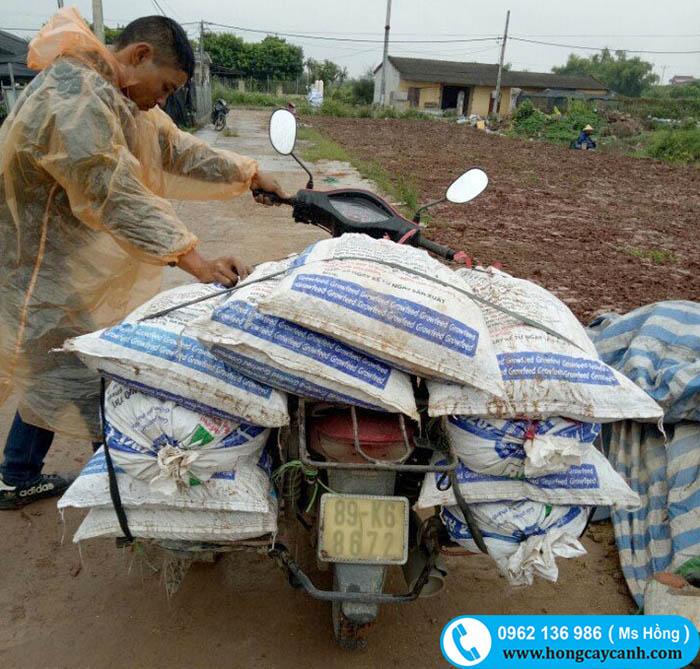 bán đất trồng cây cảnh Hà Nội